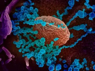 Jonge vrijwilligers gezocht die na eerste besmetting bereid zijn zich voor studie opnieuw te laten infecteren met coronavirus