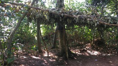 Tentenkamp ontruimd in bos langs E40
