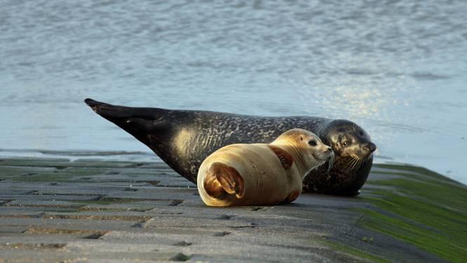 """Onze tip voor de paasvakantie: zeehonden spotten aan de kust. """"Neem gerust foto's maar blijf op afstand. Het blijven roofdieren"""""""