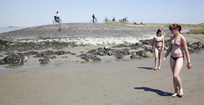 Ouderen fietsen de dijk op en vlijen zich neer in het gras en de jeugd amuseert zich op het strand. Alles is weer bij het oude op en om de Scheldedijk bij Ossenisse. foto Camile Schelstraete