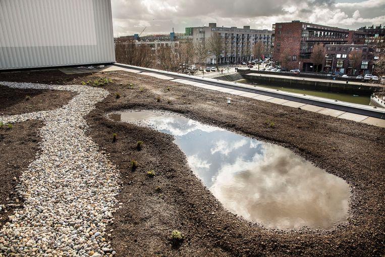 Ook voor de waterhuishouding van Rotterdam is het dak voordelig. Het idee is dat de vegetatie op een groendak water opvangt. Planten verdampen het water, waardoor minder regen het dak afstroomt. Beeld Arie Kievit