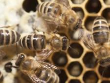 Tholen is bijenhotel rijker