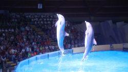 'Gevangenschap' centraal in nieuwe dolfijnenshow