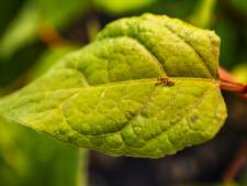 Verwoestende probleemplanten worden aangepakt