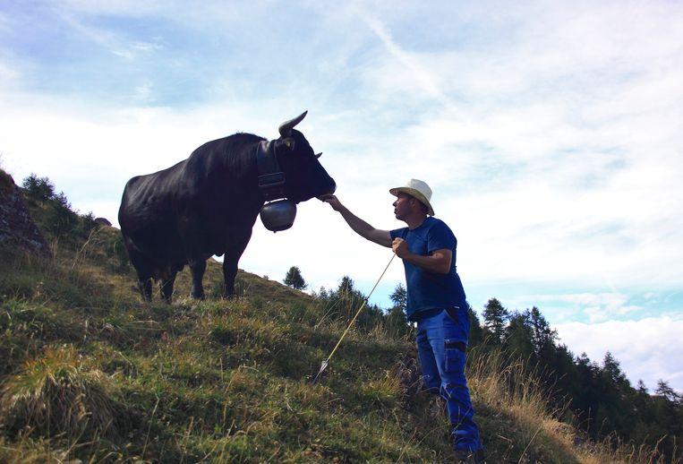 Marius Pannatier begroet zijn 'reine', Marmotte, de eerste koe van de kudde op Alpage d'Arbey.  Beeld Jonathan Vandevoorde