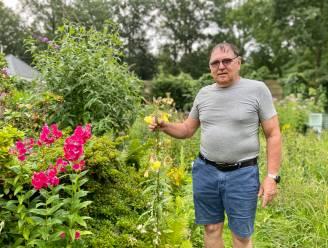 """Nergens zo veel verschillende vlinders geteld als in tuin van Ludo (69): """"Het restaurant staat hier elke dag voor ze klaar"""""""
