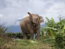 Nederland 'kan voorbeeld nemen aan China', dat veertien olifanten door het land liet trekken