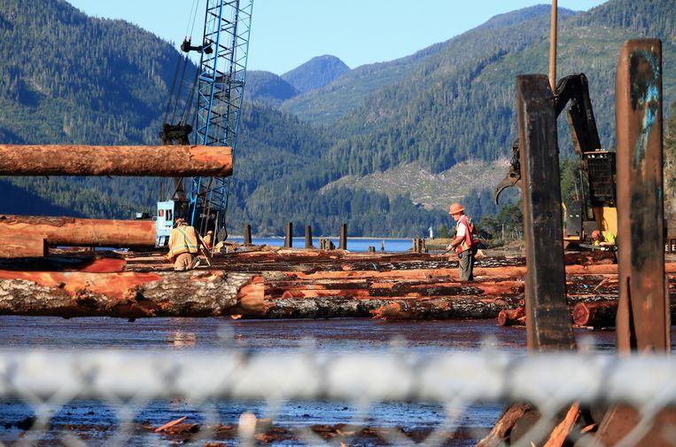 Bedrijvigheid in de houthaven van Gold River, BC. Beeld Jonathan Vandevoorde