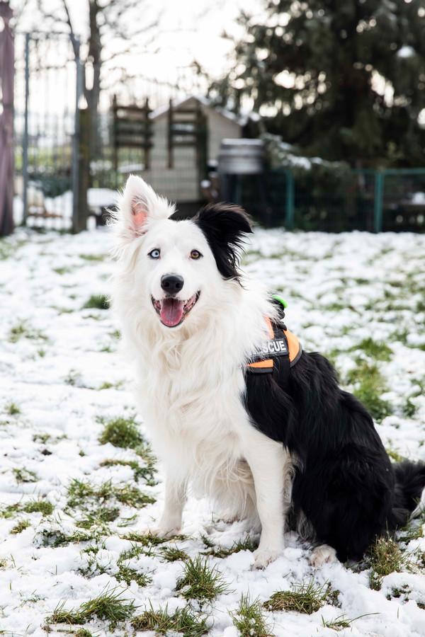 Chico, de hond die de man heeft gevonden.
