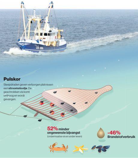 Europa doet ultieme poging om vissen met stroomstootjes tegen te gaan