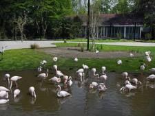 Zo ziet het nieuwe verblijf (met zwembad) van de flamingo's in Blijdorp eruit