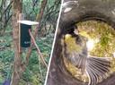 Door sabotage kon dit koolmeesje in Collendoorn het vogelhuisje niet meer verlaten. Het dier overleefde dit niet.