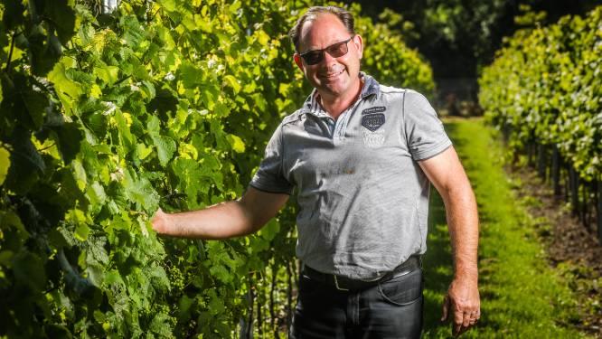 """Wijnhuis Mérula stelt eigen rosé voor: """"Een uitstekende aperitief- en terraswijn met zomerskarakter"""""""