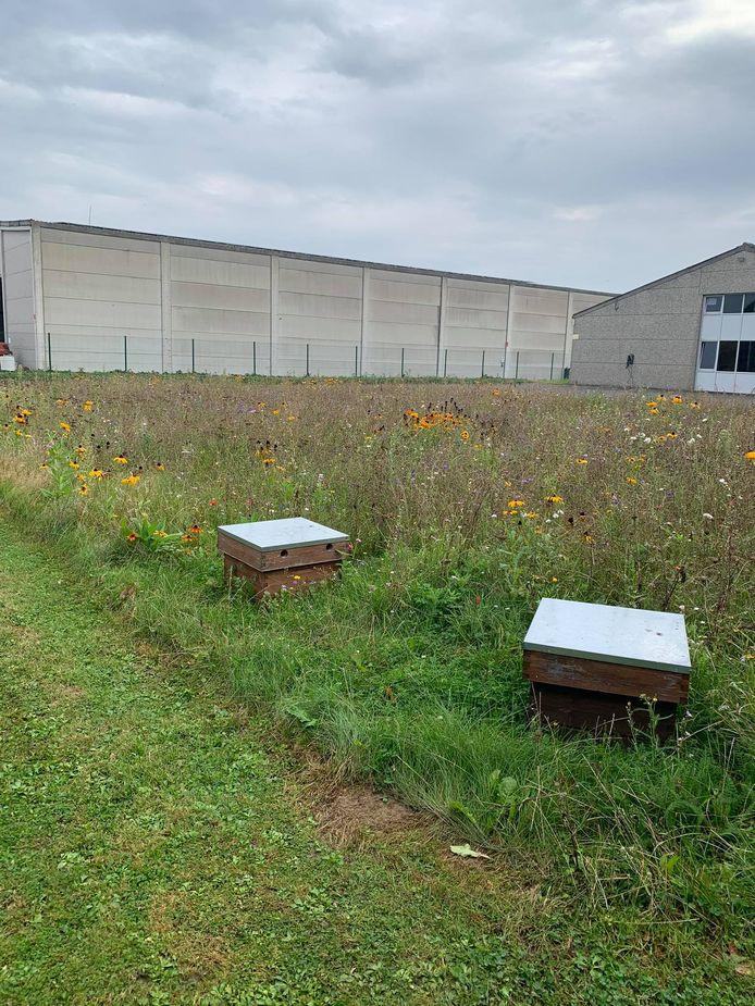 De bedrijventerreinvereniging Popin plaatste in samenwerking met Honeybeez namelijk twee bijenkasten.