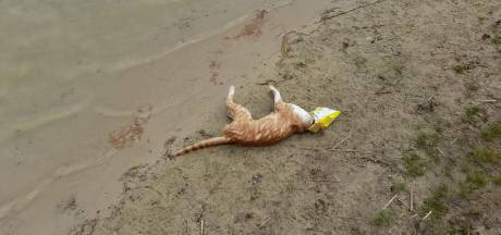Katje gestikt in zak chips, omwonenden recreatieplas furieus: 'Hilgelo dicht tot puinhoop is opgeruimd'