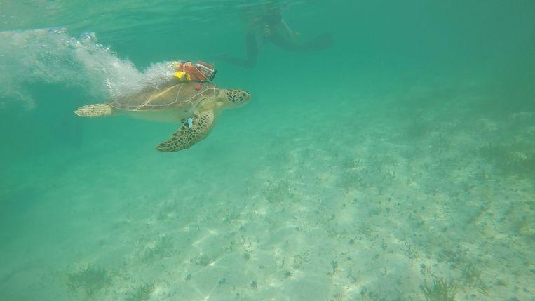 Zeeschildpad met camera Bahama's Beeld Fee Smulders