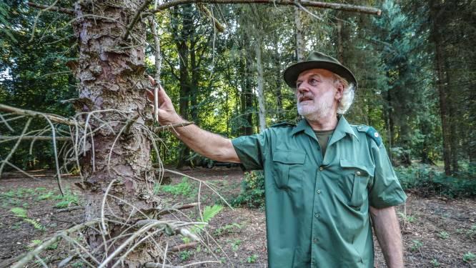 """Op pad met de boswachter, die toont welke schade hitte aanricht: """"Dit jaar al 700 bomen moeten kappen. Normaal zijn dat er nul"""""""