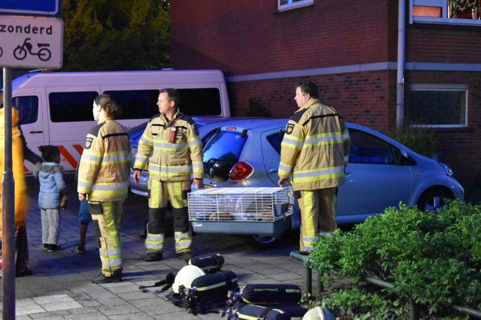 Brandweerlieden ontfermen zich over enkele huisdieren van bewoners van de flat.