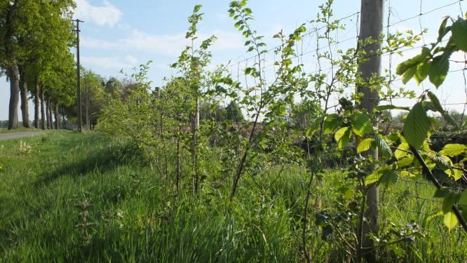 Gezinnen met een tuin kunnen gratis boom planten
