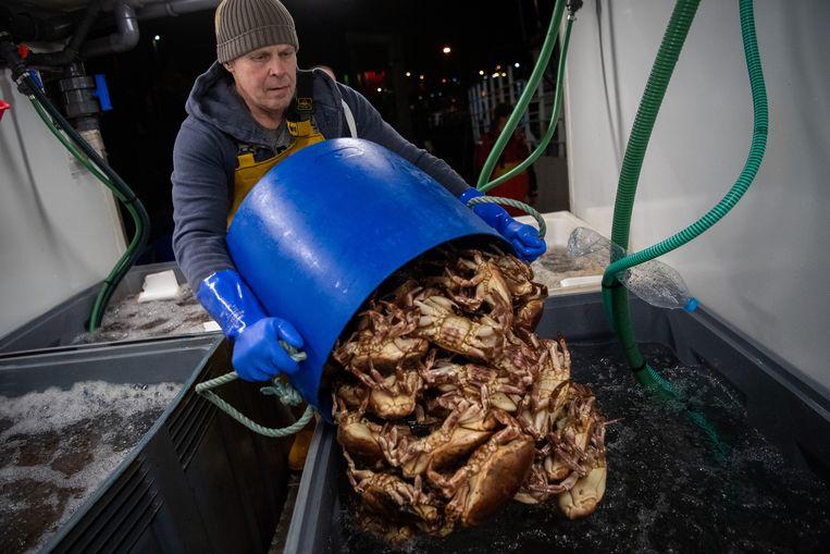 Vangst op een vissersboot van de Dartmouth Crab Company in Weymouth. Vooral de visindustrie wordt hard geraakt, onder meer door een chronisch tekort aan douanebeambten. Beeld Getty Images
