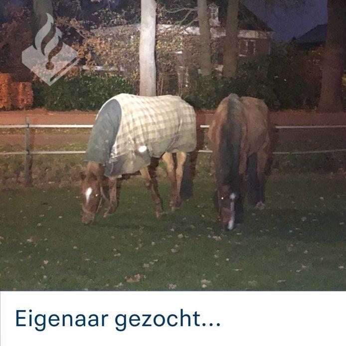 De eigenaar van de twee losgebroken paarden in Wierden heeft zich inmiddels gemeld.