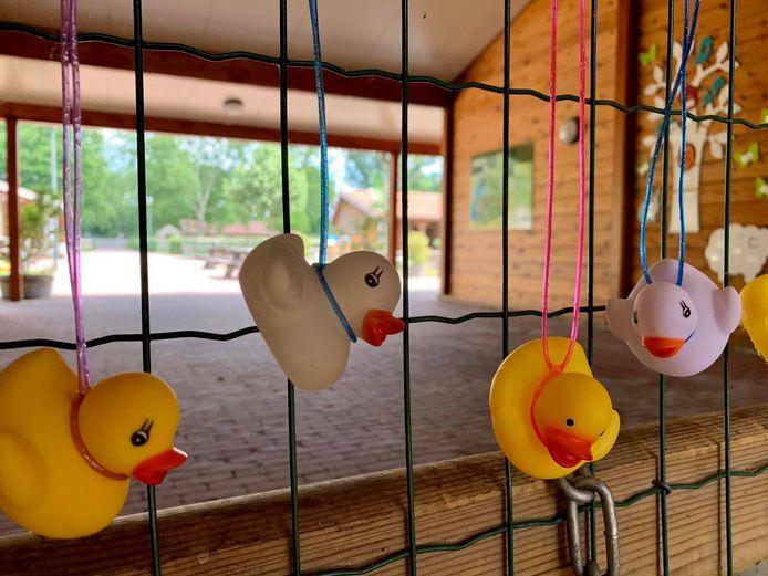 De badeendjes van kinderboerderij De Elzenhoek in Oss.