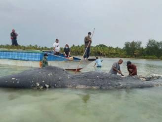 Zes kilo (!) plastic gevonden in maag van aangespoelde walvis, waaronder 115 bekers en paar teenslippers