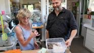 Dierenopvangcentrum VOC Neteland krijgt jaarlijkse dotatie van Herentals stadsbestuur