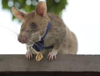 """""""Onze ratten mogen geen enkel explosief missen"""""""