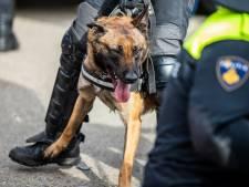 Man die politiehond 'doodschop' gaf bij Malieveldrellen krijgt taakstraf: 'Daad van een krankzinnige'