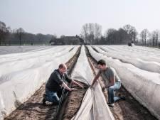Nog twee weken geduld en dan is 'het feest van het voorjaar' wel betaalbaar: asperges