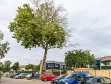 Gemeente Meppel stelt onderzoek in naar boomvergiftiging: 'Echt ongelofelijk'