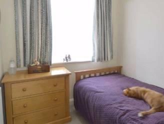 Man ziet op vastgoedwebsite zijn kat doodleuk op het bed van de buren liggen: heerlijk Twitterdraadje dat volgt bevestigt dat katten echte overlopers zijn
