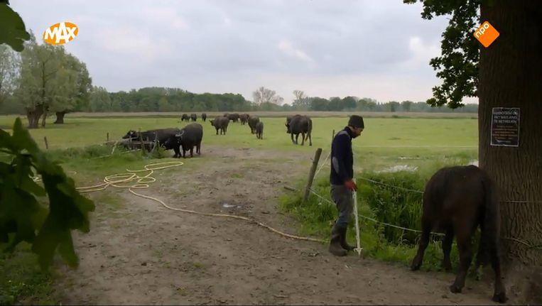Het Boerenleven Beeld NPO 1