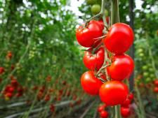 Miljoen euro boete voor tomatenkweker en kassenbouwer