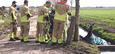 Brandweer redt met wat hulp een paard uit de sloot in Eemdijk