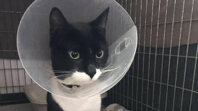 Katten doodgeschoten met luchtbuks in Ermelo: 'Dit moet stoppen'