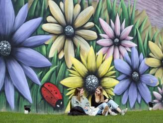 Ontdek de mooiste street art van Leuven in de HLN Street Art City Walk