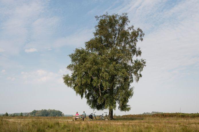 Het Haaksbergerveen is in top drie geëindigd van meest stille plekken in Nederland. Dwingelerveld in Drenthe won de verkiezing.