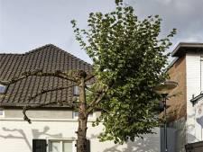 Nestelende duif zorgt voor half gesnoeide boom in Esch