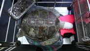 Schildpad die 915 'geluksmunten' inslikte toch overleden