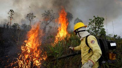 """Verbod in Brazilië lijkt te werken: aantal bosbranden in Amazonegebied """"ongekend laag"""""""