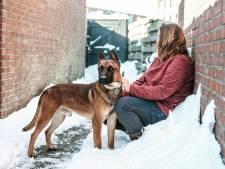Politiehonden uitgehongerd terug van justitie: 'We schrokken ons lam, zo mager als de hond was, schuw, teruggetrokken en bleu'