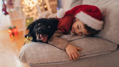7 kerstcadeaus voor hondjes