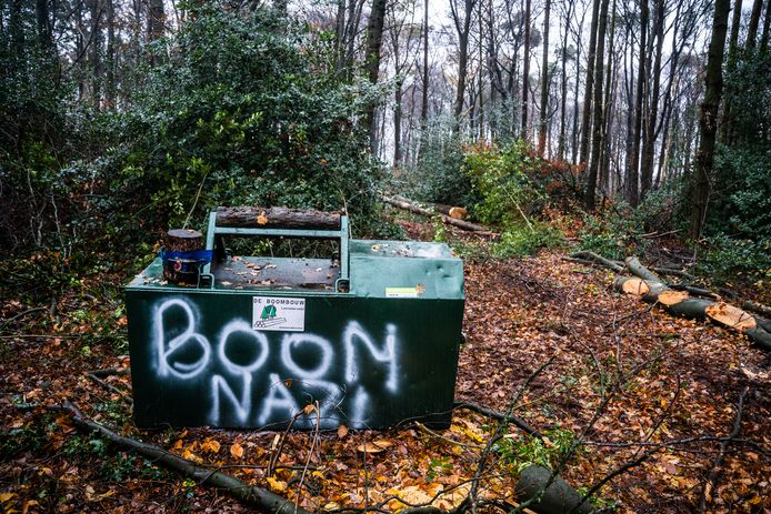 Bomenkap Gulden bodem Arnhem.
