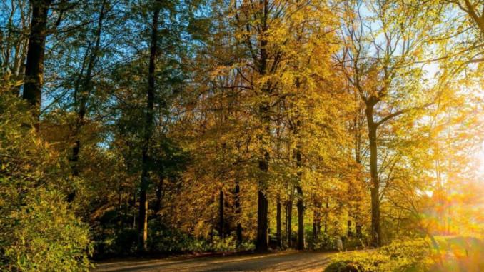La forêt de Soignes et ses merveilles.