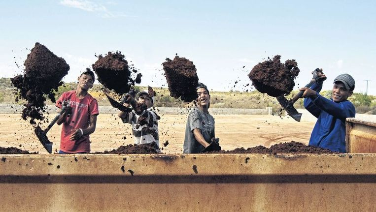 Boeren van de Heiveld Coöperatie scheppen de gefermenteerde rooibosthee om. Beeld Liesbeth Sluiter