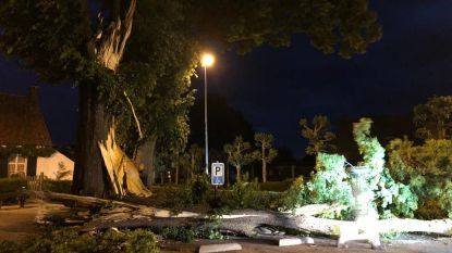 Grote bomen vallen om op Poeleinde in Wortel en op de Sint-Lenaartseweg in Rijkevorsel: enkele wagens krijgen elektrische schok
