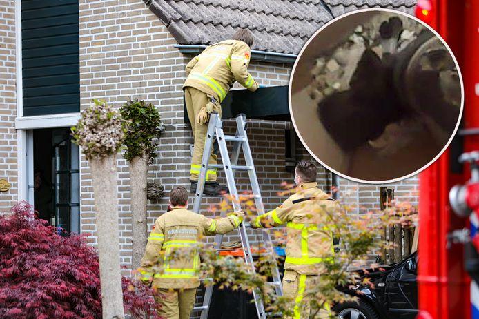 Adriana Plaggenborg kreeg dinsdagmiddag de schrik van haar leven, toen ze een steenmarter in een spouw hoorde. De brandweer en dierenambulance redden het dier uit zijn benarde positie.
