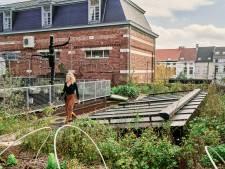 """Moestuin van 500 vierkante meter op dak in Gentbrugge staat over te nemen: """"Het kan opnieuw een eventlocatie worden"""""""